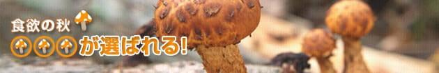 mushroom_630x106(2)